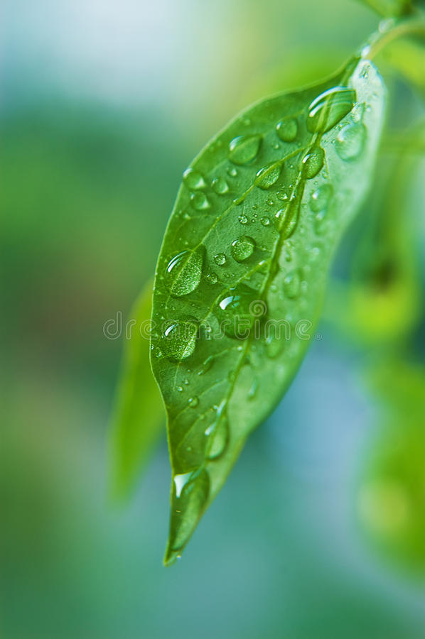 Waterdrop na folha fotos de stock