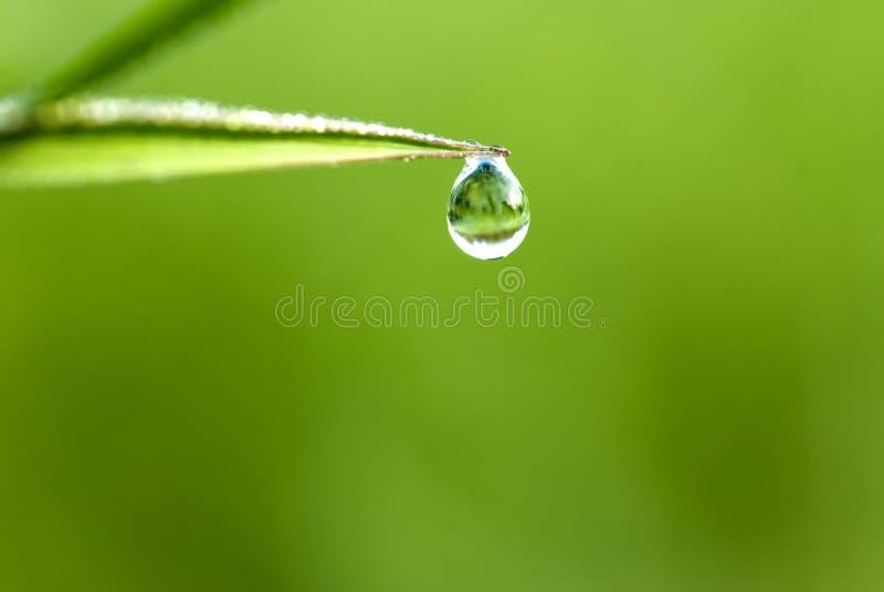 Waterdrop Na Grama Fotografia de Stock Royalty Free