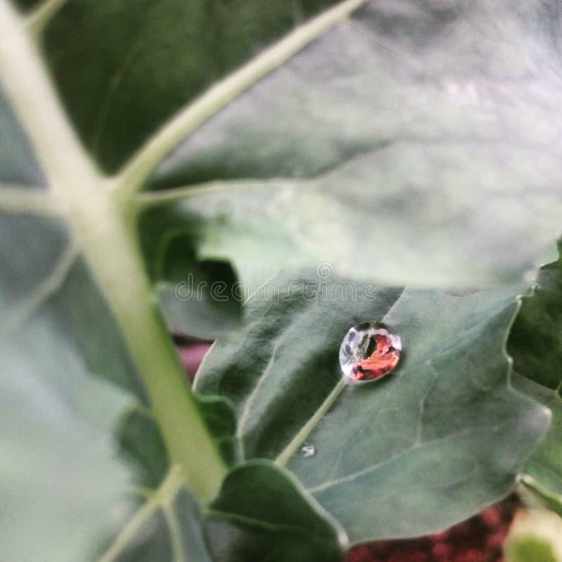 Waterdrop na leaf fotografia stock