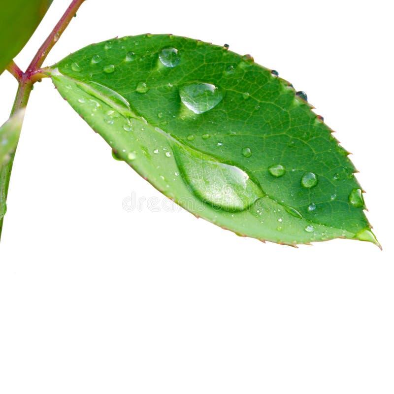 Free Waterdrop On Leaf Royalty Free Stock Image - 5125696