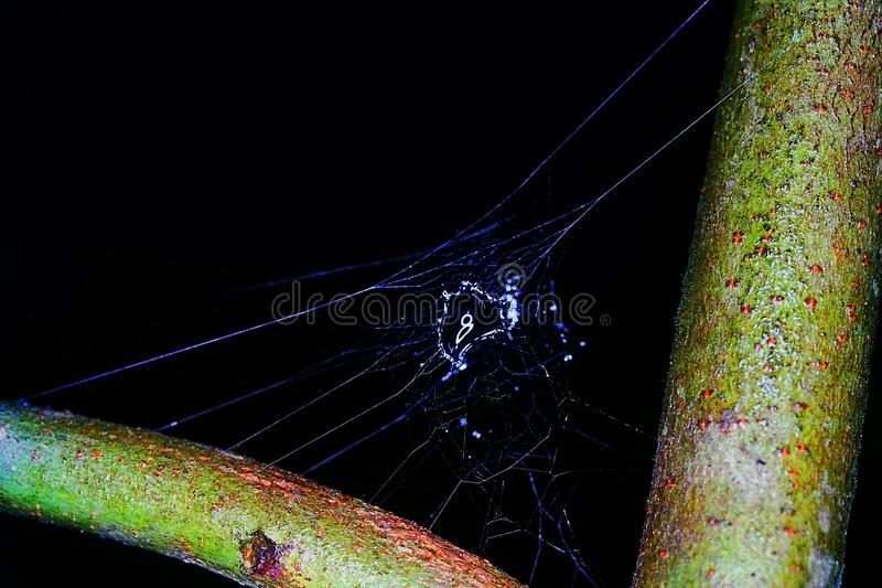 Waterdrop. A waterdrop on a spider& x27;s web at night royalty free stock image