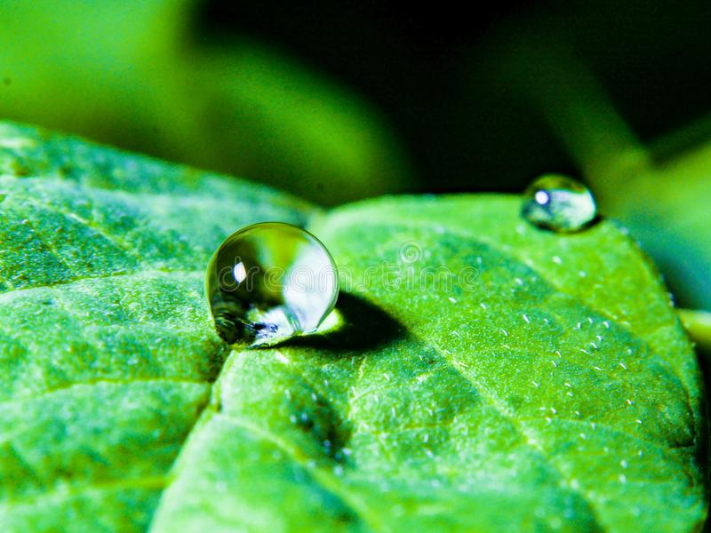 Waterdrop. On a leaves stock photos