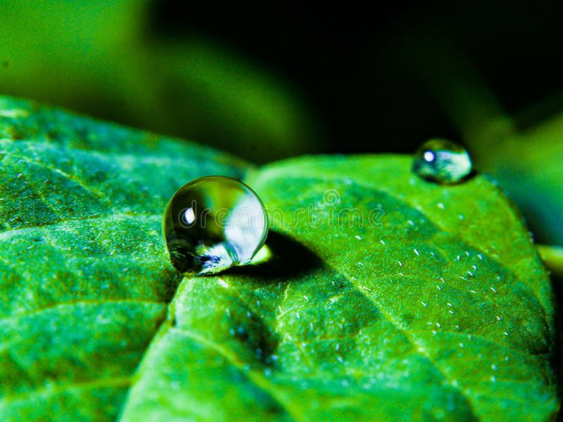 Waterdrop. On a leaves royalty free stock images