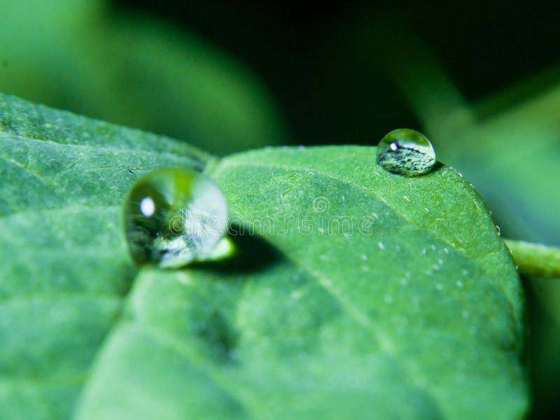 Waterdrop. On a leaves royalty free stock photo