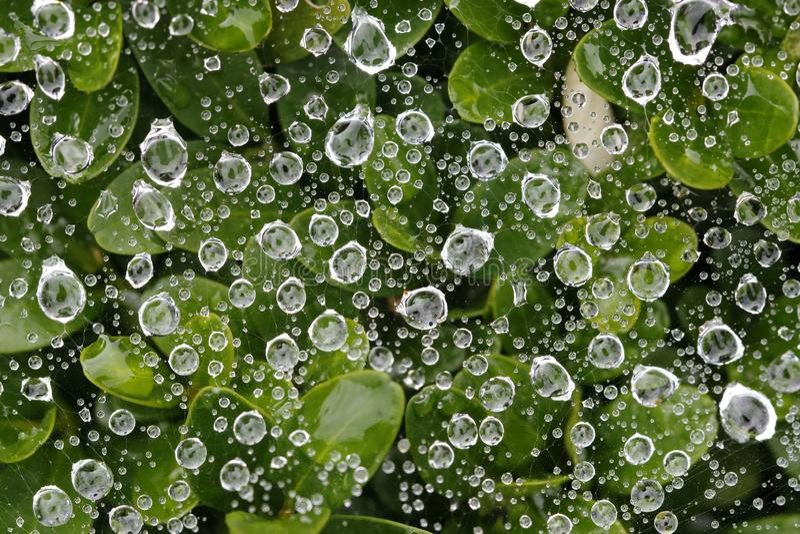Waterdrops σε έναν Ιστό αραχνών μετά από τη βροχή στοκ εικόνες με δικαίωμα ελεύθερης χρήσης