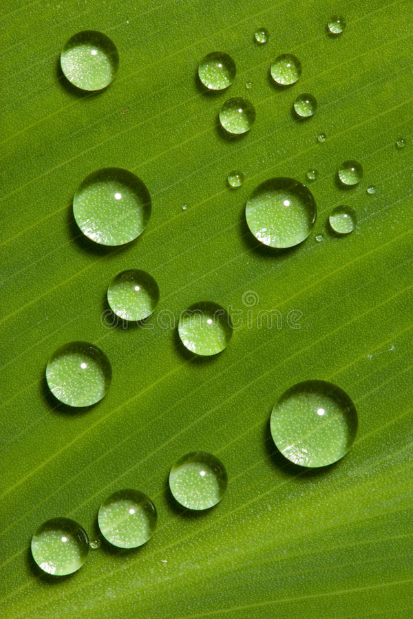 Waterdrops στο πράσινο φύλλο στοκ φωτογραφίες