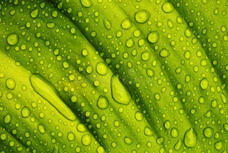 Waterdrops imagen de archivo libre de regalías