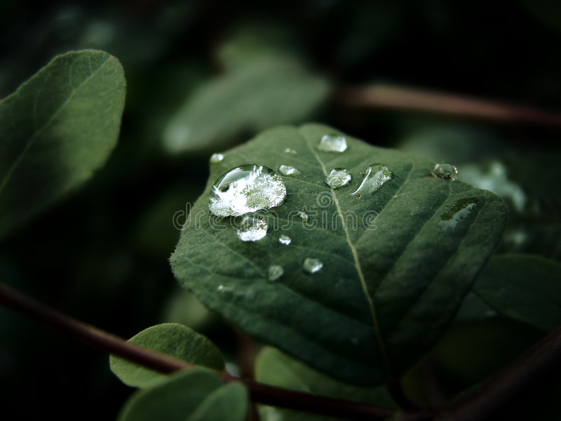 waterdrops στοκ εικόνα με δικαίωμα ελεύθερης χρήσης