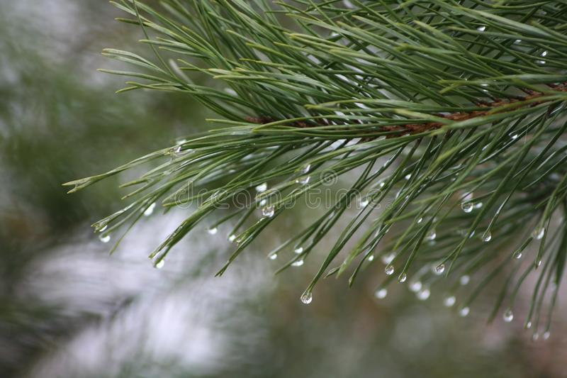 Download Waterdrops стоковое изображение. изображение насчитывающей падение - 40582401