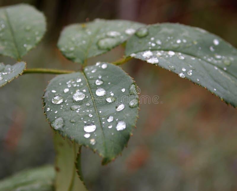 Download Waterdrops стоковое изображение. изображение насчитывающей bush - 40582619