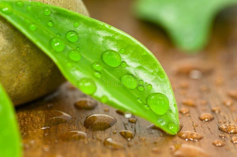 waterdrops στοκ εικόνες με δικαίωμα ελεύθερης χρήσης