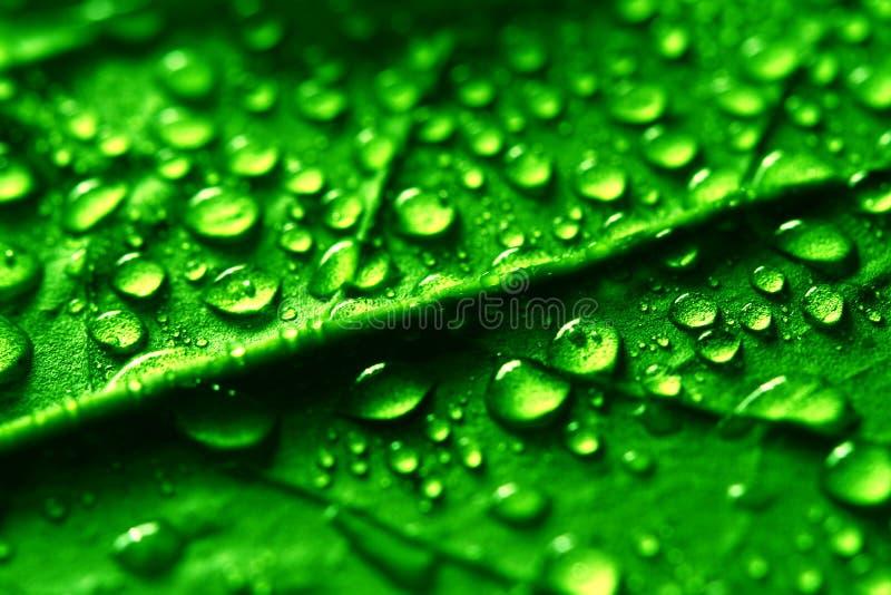 Waterdrops fotografia stock libera da diritti