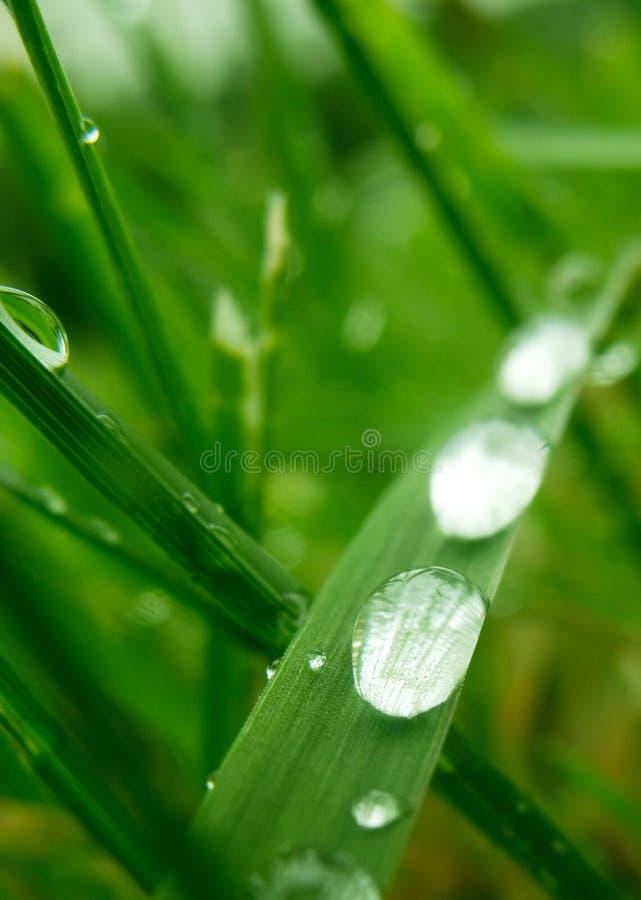 waterdrops стоковая фотография rf