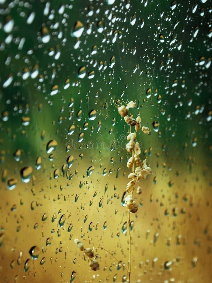 Waterdrops στοκ εικόνες