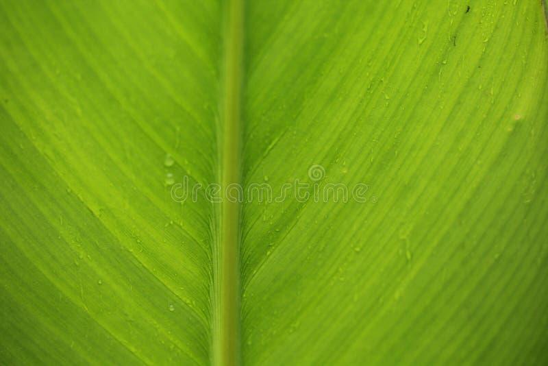 Waterdrops blad arkivfoto