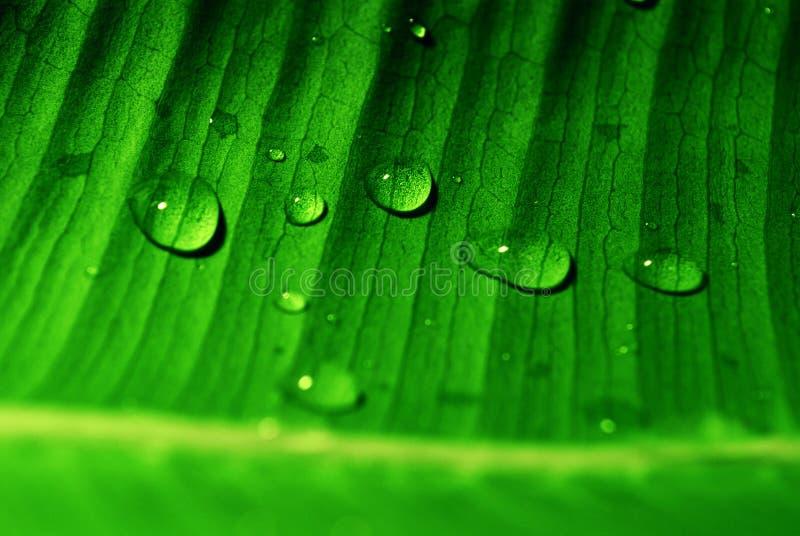 Waterdrops en la hoja foto de archivo libre de regalías