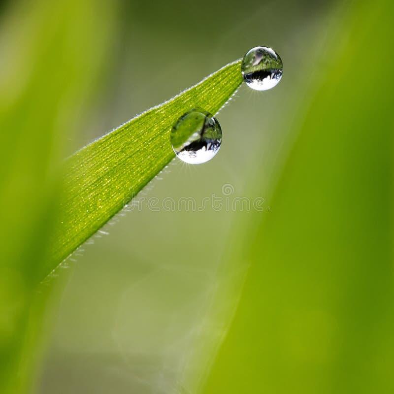 Waterdrops en la hoja joven fotografía de archivo libre de regalías