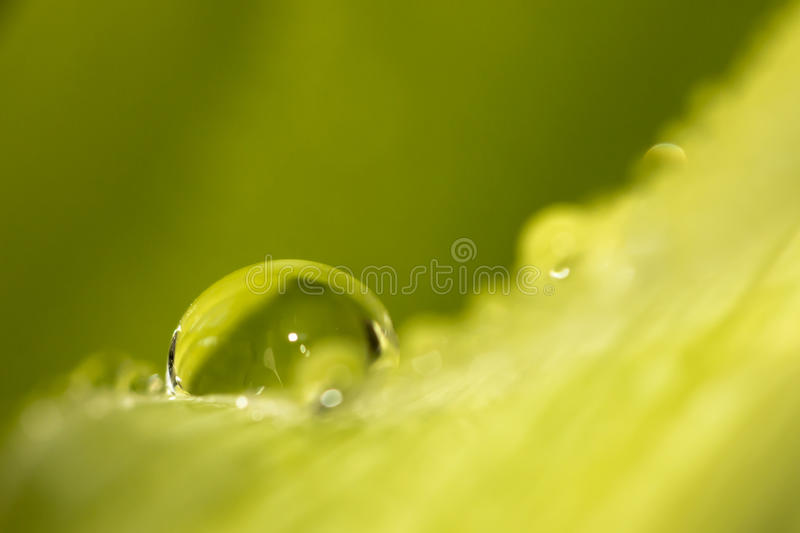 Waterdrops on green leaf background stock image