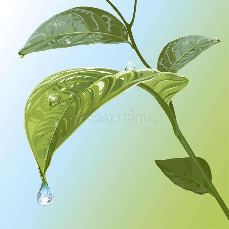 Waterdrops On Leaves. Editable vector illustration