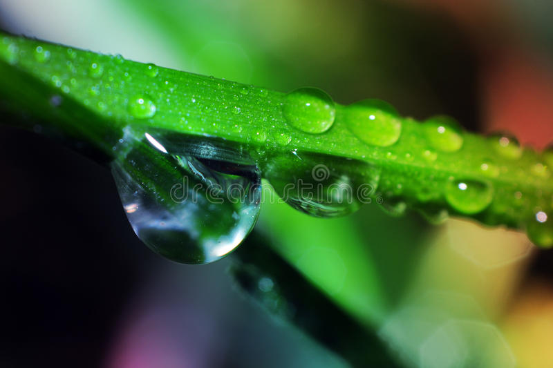 Wet grass blade. Waterdrops over grass blade macro royalty free stock photo