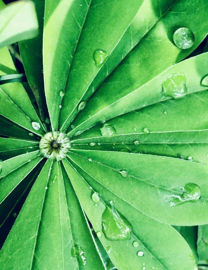 Waterdrops p? en leaf royaltyfria bilder
