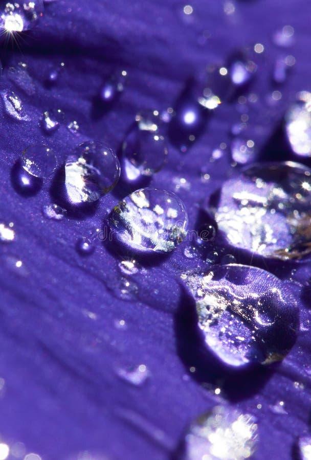 Waterdrops su un fiore fotografie stock libere da diritti