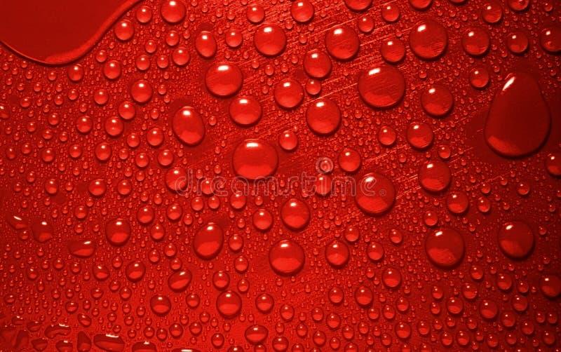 Waterdrops vermelhos foto de stock royalty free