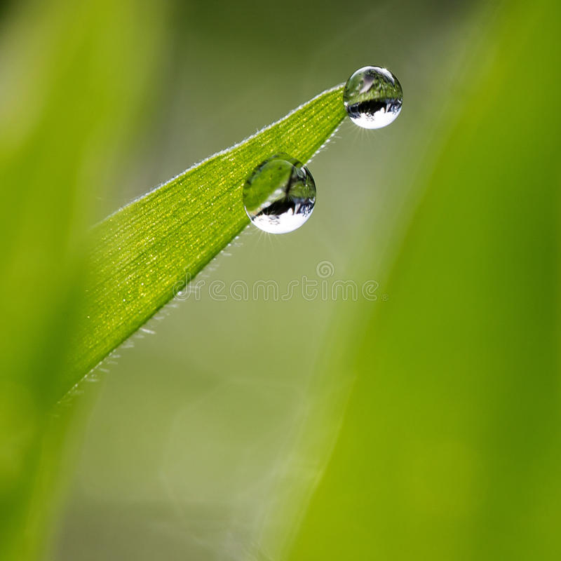 Waterdrops on young leaf royalty free stock photography