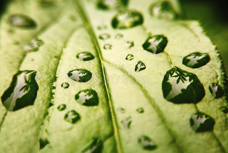 Waterdruppeltjes op het blad van de installatie royalty-vrije stock afbeelding