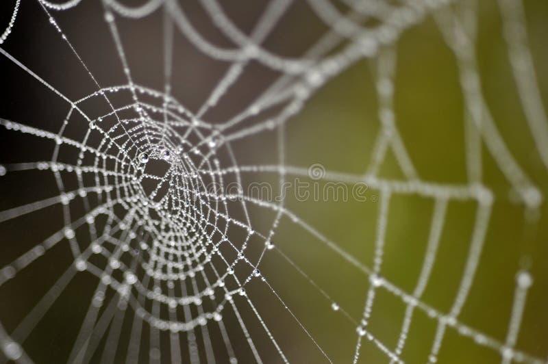 Waterdruppeltjes op het spinneweb royalty-vrije stock afbeeldingen