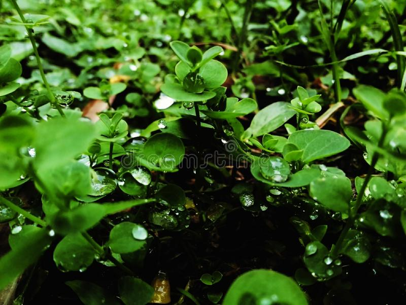Watered plant ground. These plant are wet because rainy and stopped the water particles was dropped on these leaves royalty free stock photo