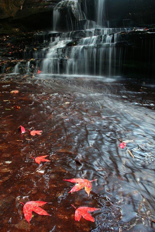 waterfal liść piękny klon zdjęcie stock