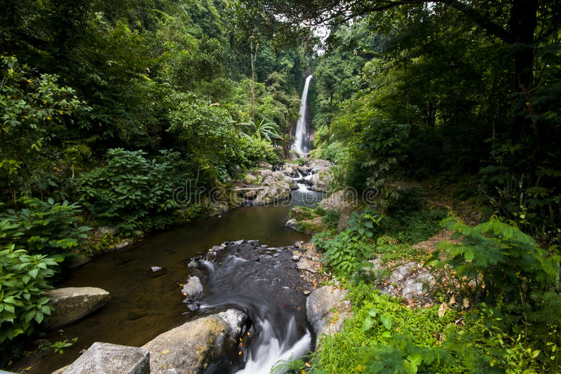 Download Waterfall stock image. Image of indon, plants, forest - 14667969