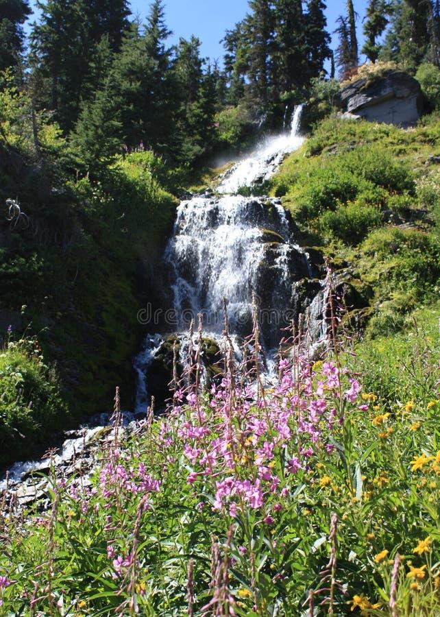Download Waterfall stock photo. Image of wild, waterfalls, green - 8819598