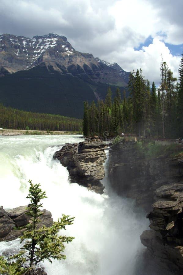 Waterfall at Athabasca royalty free stock photos