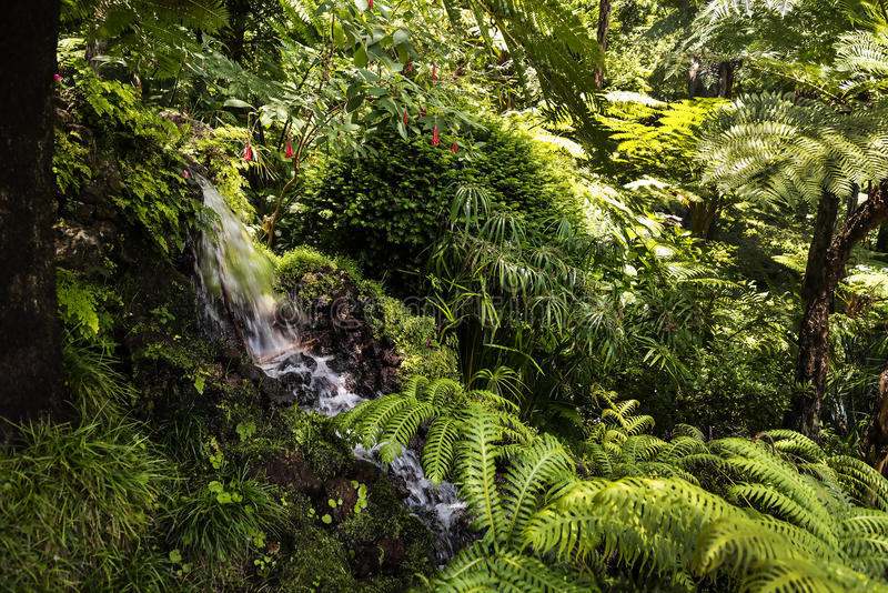 Waterfall in a Beautiful Garden at Monte above Funchal Madeira. This wonderful garden is at the top of the cablecar from the seafront in Funchal. It is filled royalty free stock images