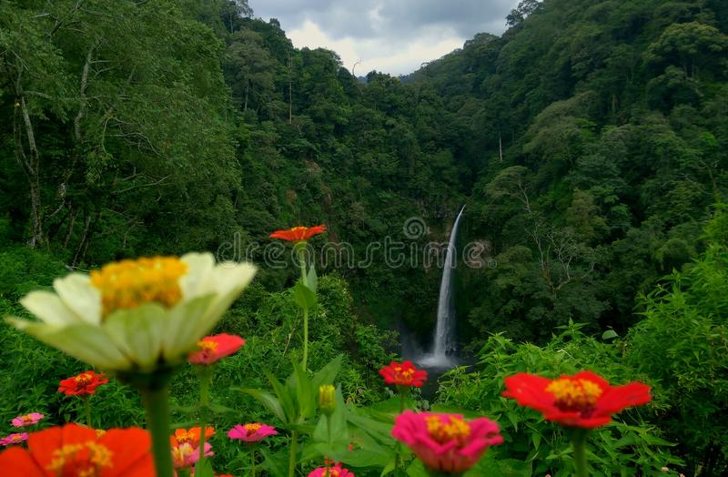Waterfall beauty Coban pelangi. Beauty of coban rainbow waterfall in Malang district, East Java, Indonesia royalty free stock image