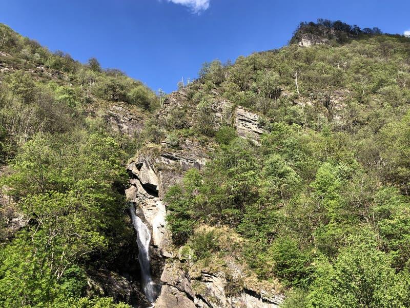 Waterfall Cascata Di Giumaglio of Wasserfall Cascata Di Giumaglio, Giumaglio de Maggia-Vallei of Valle Maggia of Maggiatal royalty-vrije stock afbeelding