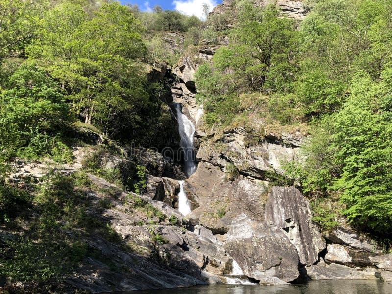 Waterfall Cascata Di Giumaglio of Wasserfall Cascata Di Giumaglio, Giumaglio de Maggia-Vallei of Valle Maggia of Maggiatal royalty-vrije stock fotografie