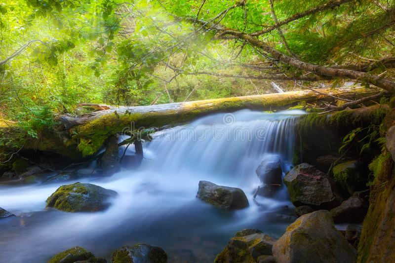 Waterfall along Cold Spring Creek in Oregon. Waterfall on Cold Spring Creek along Tamanawas Falls Trail at Mount Hood National Forest in Oregon royalty free stock images