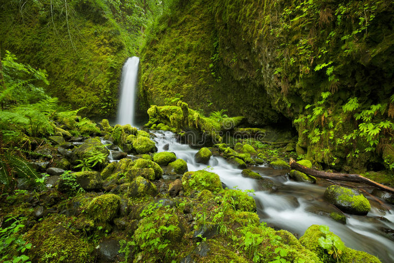 Waterfall in the Columbia River Gorge, Oregon, USA. A hard-to-reach and remote waterfall in the backcountry of the Columbia River Gorge, Oregon, USA stock photos