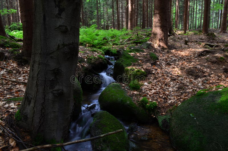 Waterfall in cr. Forest in CRnCz forestnlife in CZnCZnCzech republicnCzech republic forestnCZ waterfall Czech nature nature in Czech stock images