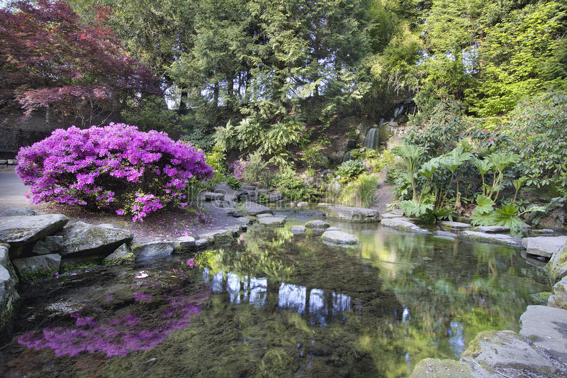 Waterfall at crystal springs rhododendron garden in spring stock photos image 30756093 for Crystal springs rhododendron garden