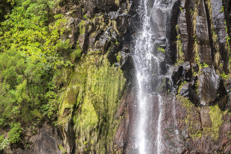 Waterfall Detail with Rock and Plants royalty free stock image