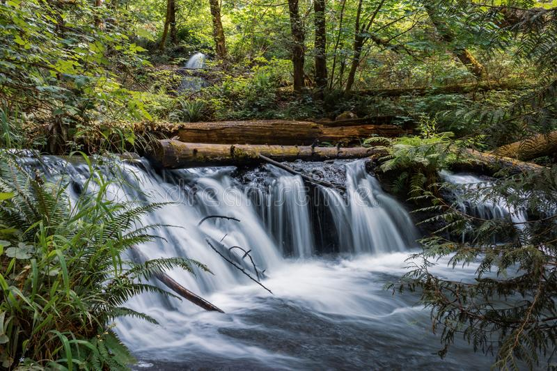 waterfall and fallen logs with fern in western washington state royalty free stock photos