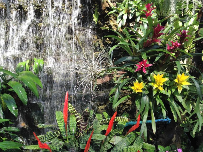 The waterfall and flowers in the garden royalty free stock image