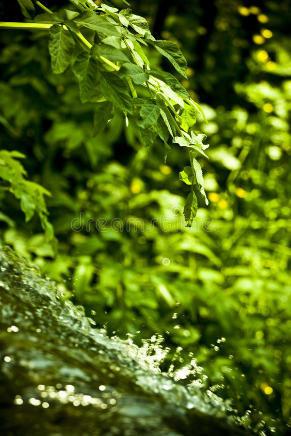 Download Waterfall in forest stock photo. Image of rural, stream - 5705414