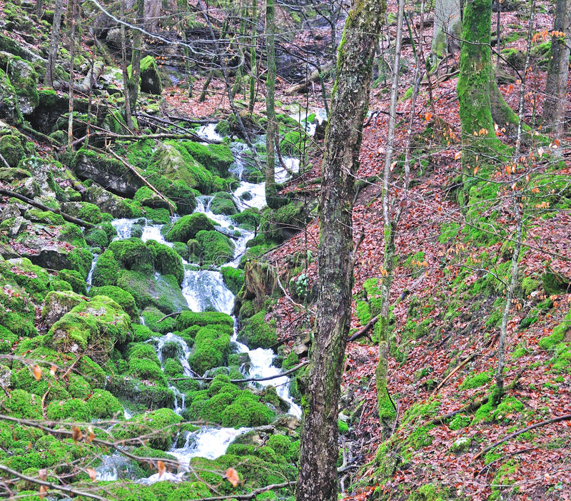 Download Waterfall in forest stock photo. Image of grass, leaf - 40461464