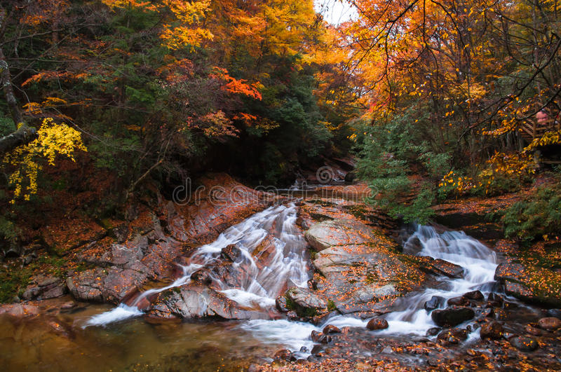 waterfall and sunshine in golden fall forest royalty free stock photo