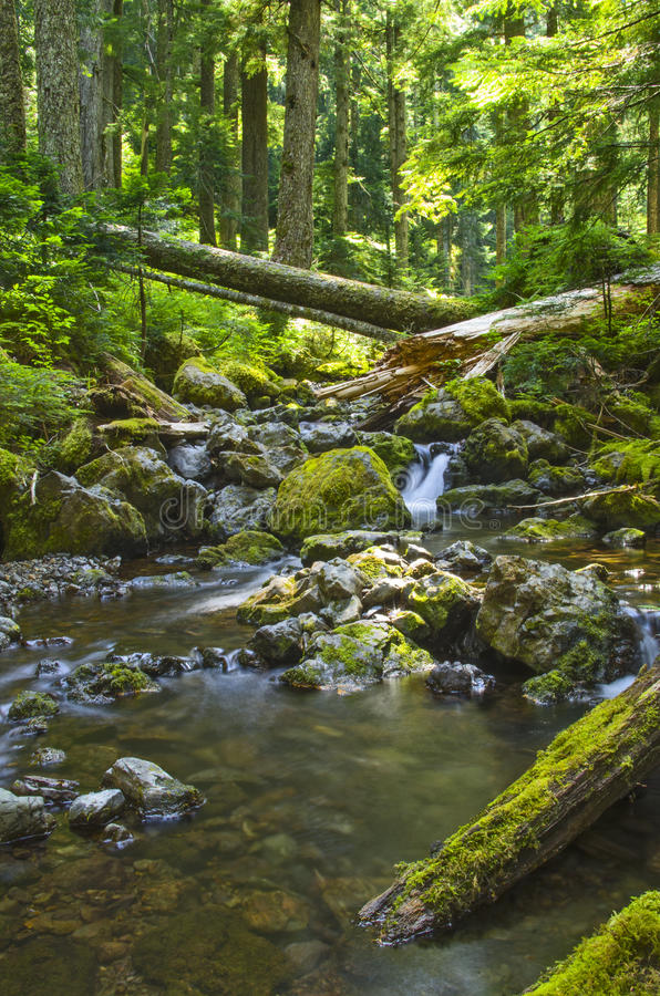 Waterfall in forest creek Olympic National Forest Washington state. Clear, cold water runs through the cool forest and over a small waterfall. The creek bed is stock photo